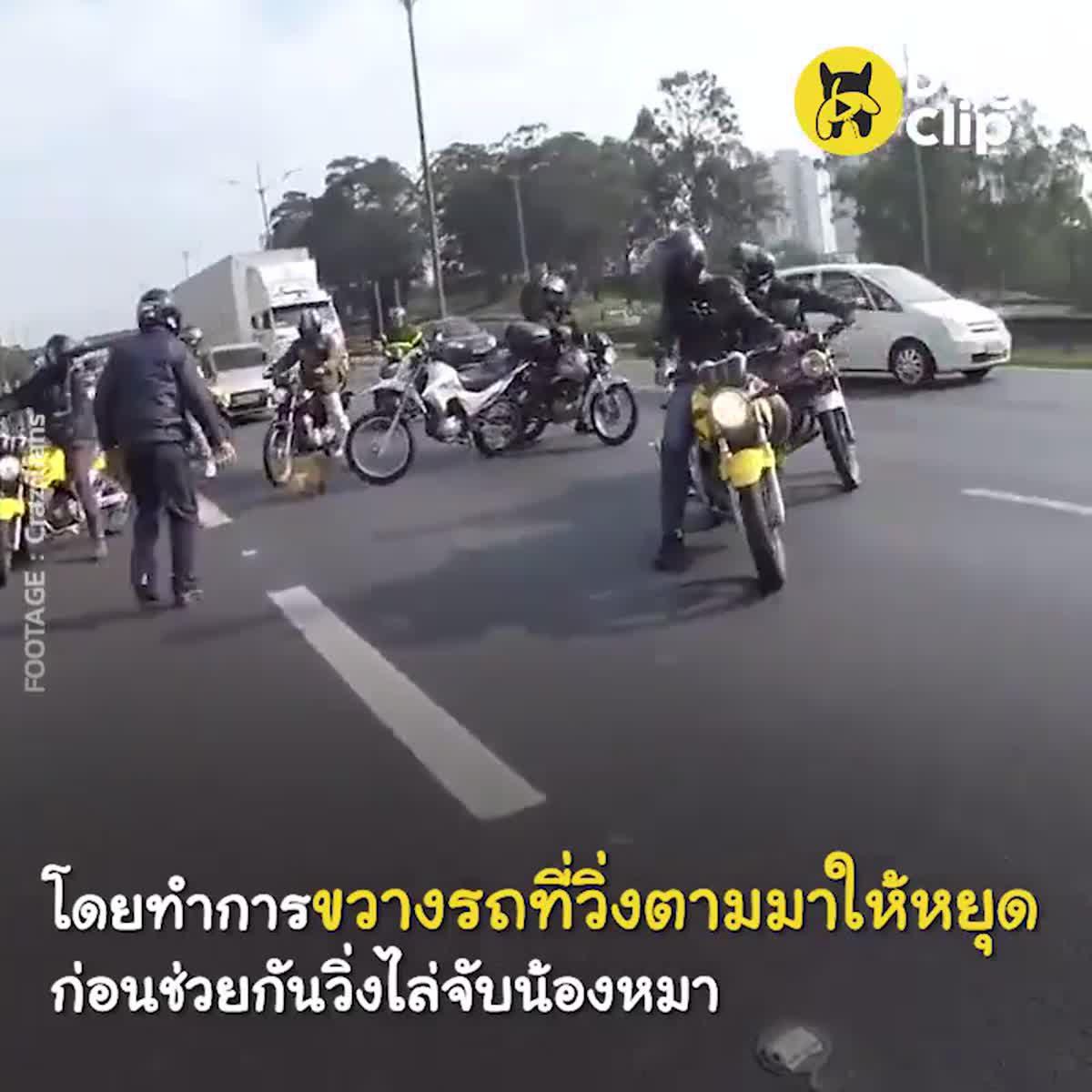 กลุ่มไบค์เกอร์ร่วมใจหยุดรถช่วยน้องหมากลางถนน