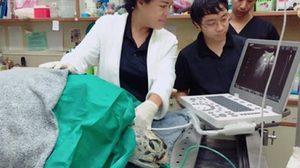 เต่าออมสิน ยังโคม่า หลังเข้าผ่าตัดอีกครั้ง ด้านหมอขอทำใจ แต่ลึกๆ ยังหวัง