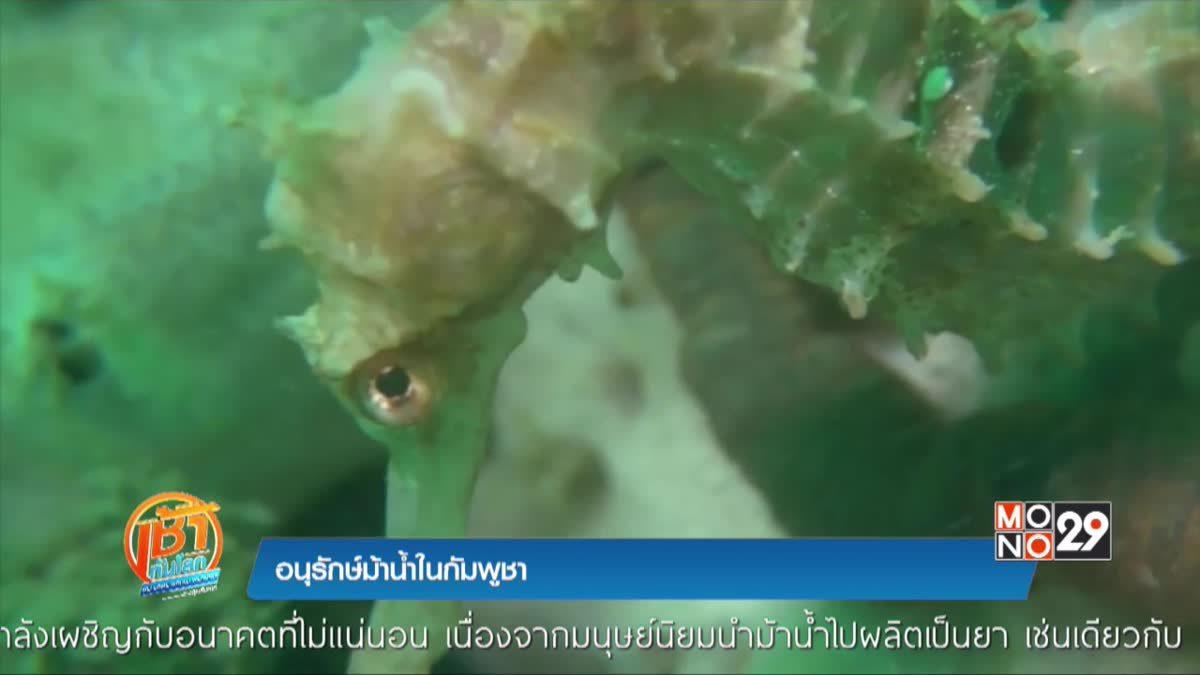 อนุรักษ์ม้าน้ำในกัมพูชา