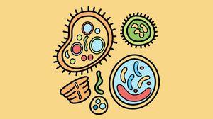 ไวรัสเมอร์ส (MERS)ทำความรู้จักวิธีป้องกัน