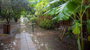 เทคนิคการดูแลต้นไม้ในช่วงฝนตกหนัก น้ำท่วมสวน