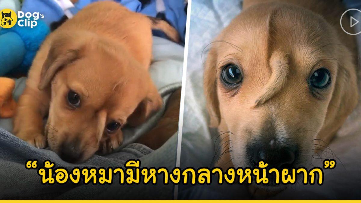 """""""นาร์วาล"""" น้องหมาที่มีหางโผล่ตรงกลางหน้าผาก ถูกช่วยชีวิตจากความหนาวเย็น"""