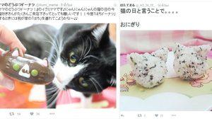 ทาสแมวฟิน!! Cat Day  22 กุมภาพันธ์ ญี่ปุ่นเฉลิมฉลองวันแมว