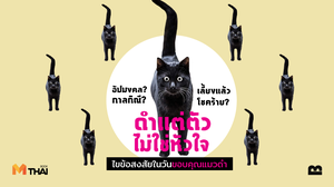 เธอและแมวตัวนั้น | ดำแต่ตัวไม่ใช่หัวใจ ไขข้อสงสัยร้าย ๆ ในวันขอบคุณแมวดำ
