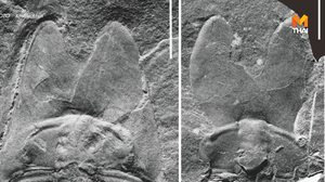 นักวิทย์จีนพบฟอสซิล 'ไทรโลไบต์' 500 ล้านปี หน้าตาประหลาด