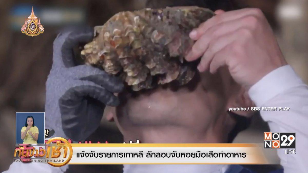 แจ้งจับรายการเกาหลี ลักลอบจับหอยมือเสือทำอาหาร