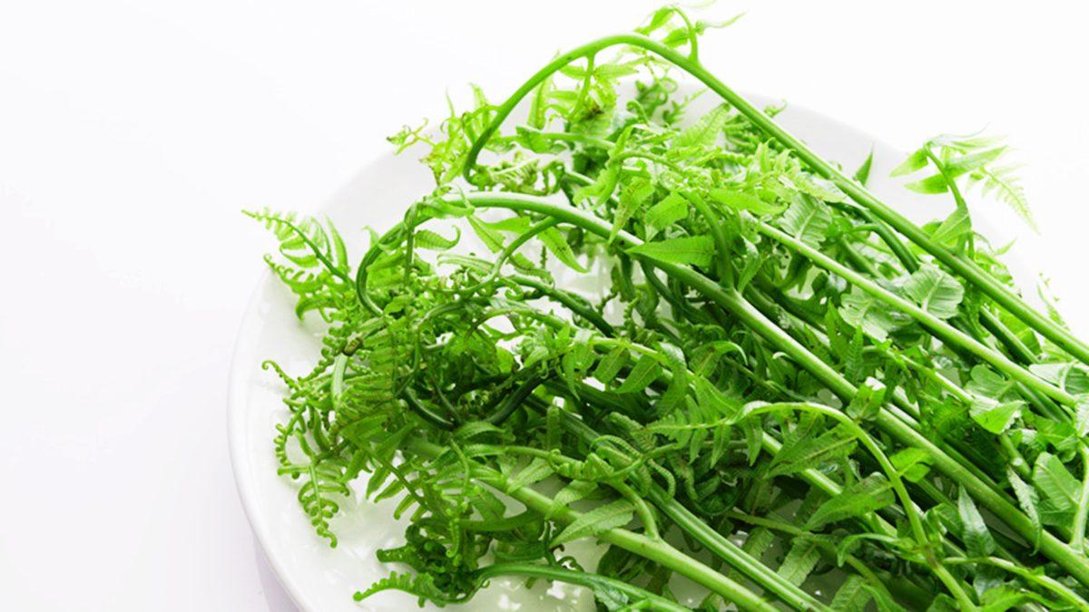 วิธีปลูกผักกูด ผักสวนครัวปลอดสารเคมี กินดีมีประโยชน์ ประดับตกแต่งบ้านก็สวยงาม
