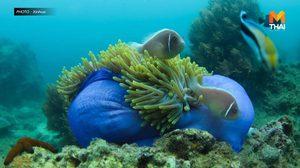 วิจัยออสเตรเลียชี้ 'กระดาษกรอง' ช่วยเผยสายพันธุ์สัตว์ทะเล
