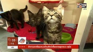 อังกฤษเตรียมแบนร้านสัตว์เลี้ยงขายลูกแมว-สุนัข