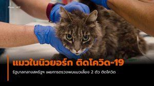 ตรวจพบ แมว 2 ตัวในนิวยอร์ก ติดโควิด-19