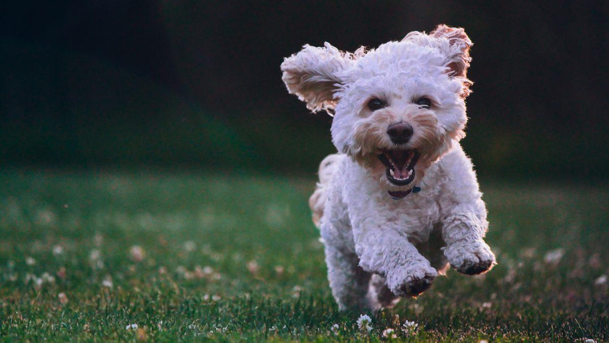 เข้าใจ 10 พฤติกรรมน้องหมา เขากำลังบอกอะไรบางอย่างกับคุณ