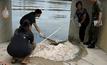ผู้เชี่ยวชาญชี้ปลากระเบนราหูอาจตายถึง 100 ตัว
