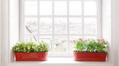 3 ทริคง่ายๆ จัดวาง ต้นไม้ในบ้าน ให้เติบโตได้อย่างดี