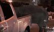 ช้างเร่ร่อนเครียดทำร้ายนักท่องเที่ยว