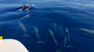 สุดตื่นตา! ฝูงโลมากระโดดกว่า 20 ตัว โผล่เล่นน้ำ อช.เกาะสิมิลัน