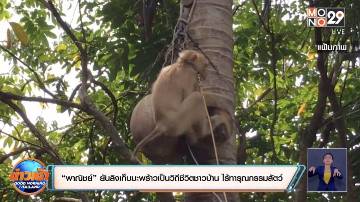 """""""พาณิชย์"""" ยันลิงเก็บมะพร้าวเป็นวิถีชีวิตชาวบ้าน ไร้ทารุณกรรมสัตว์"""