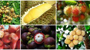 21 สวนผลไม้ ภาคตะวันออก อร่อยทุกไร่ ชิมไปทุกสวน