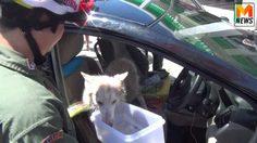 เร่งช่วยหมา-แมว กว่า 10 ตัว ถูกขังในรถเก๋งจอดตากแดด