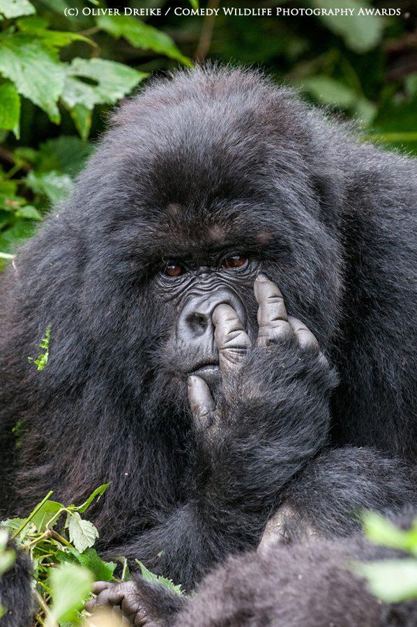 BRONZE Runner up Comedy Wildlife Photography Awards