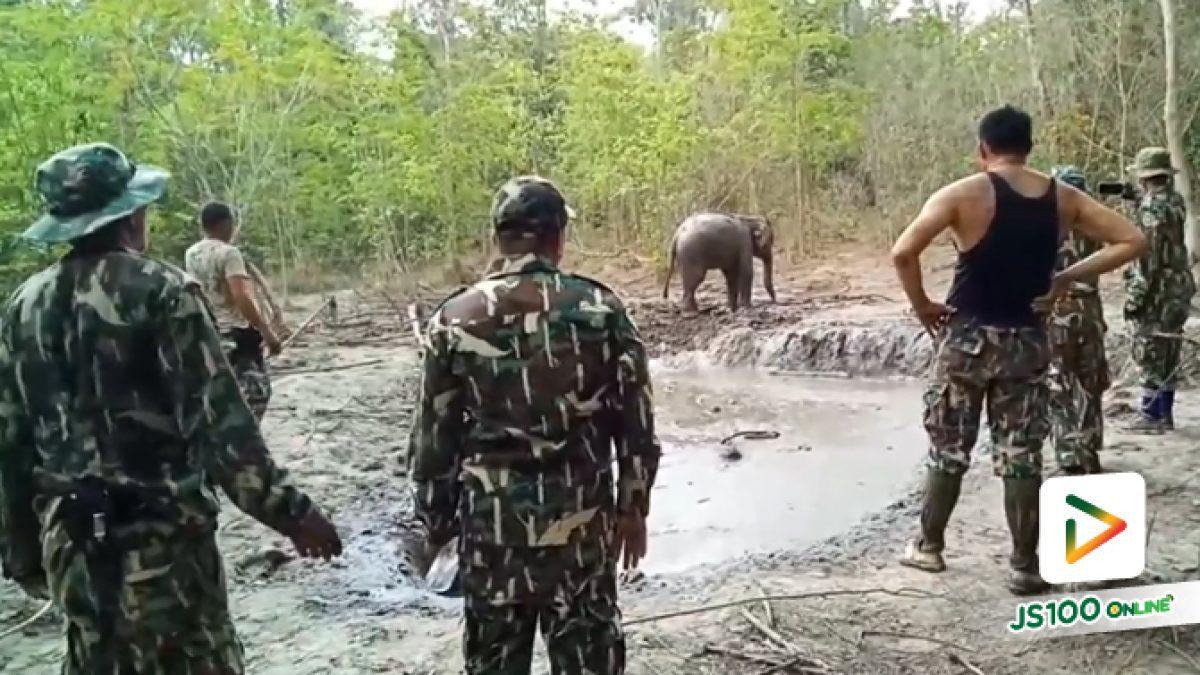 ไม่ใช่แค่เจ้าหน้าที่ฯ ที่ดีใจ พวกเราก็ดีใจที่ช้างน้อยตัวสุดท้ายขึ้นจากบ่อโคลนสำเร็จ (28-03-62)