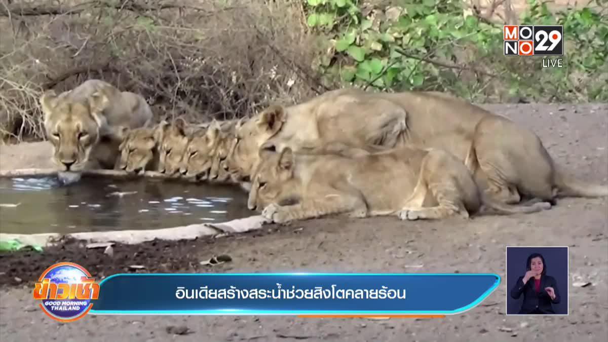อินเดียสร้างสระน้ำช่วยสิงโตคลายร้อน