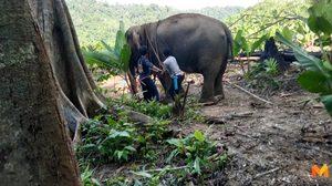ช้างพัง กระทืบคนเลี้ยงตาย ก่อนหนีเข้าป่า หวั่นอาละวาดชุมชน!