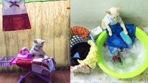 เฮงเฮง และซาลาเปาแมวเทพสุดขยันช่วยทำงานบ้าน