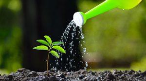 รดน้ำต้นไม้ที่ถูกวิธี ช่วยให้ต้นไม้เจริญเติบโตได้อย่างสวยงาม