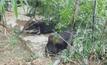 พบช้างป่า 3 ตัวเล่นน้ำใกล้สวนผลไม้จันทบุรี