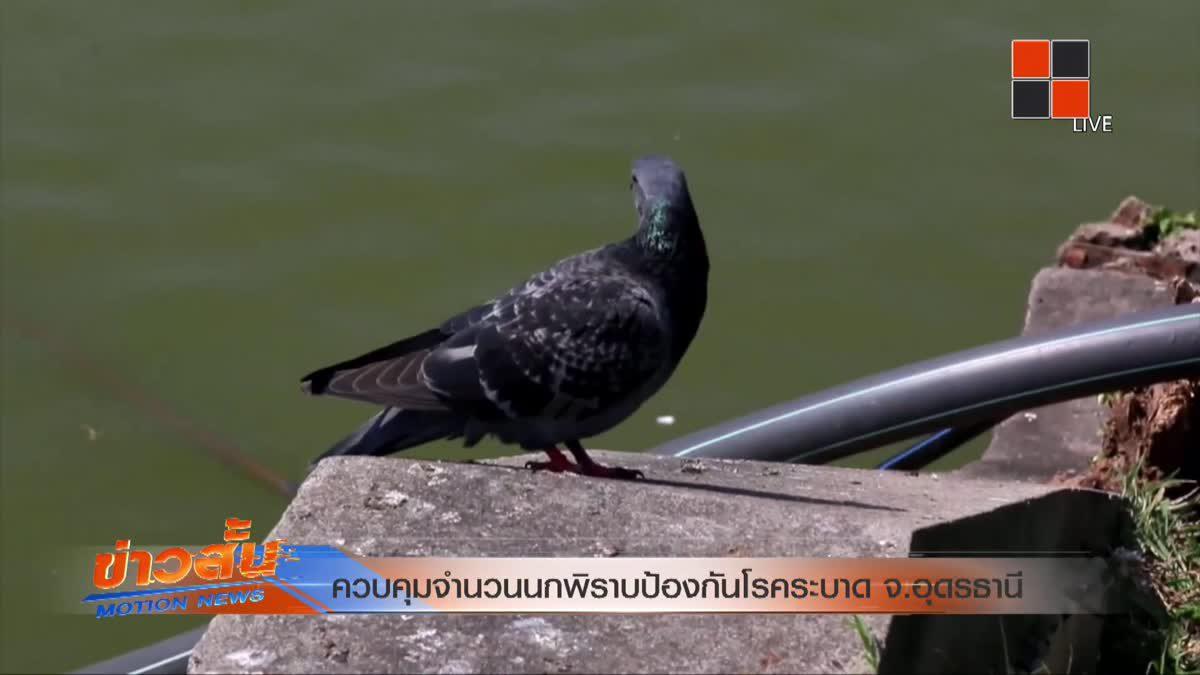 ควบคุมจำนวนนกพิราบป้องกันโรคระบาด จ.อุดรธานี