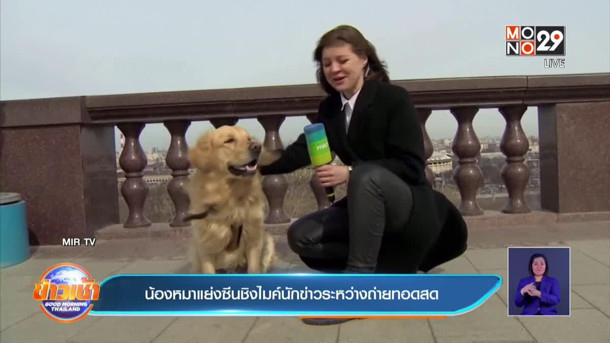 น้องหมาแย่งซีนชิงไมค์นักข่าวระหว่างถ่ายทอดสด