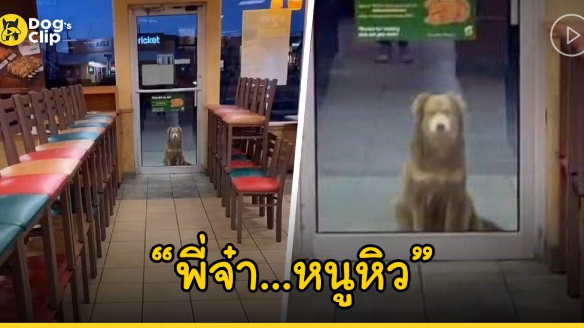 น้องหมาจรจัดมานั่งรอที่หน้าร้านแซนด์วิชเวลาเดิมทุกๆ วันเพื่อขออาหาร