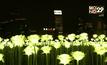 สวนดอกกุหลาบ LED ที่ฮ่องกง