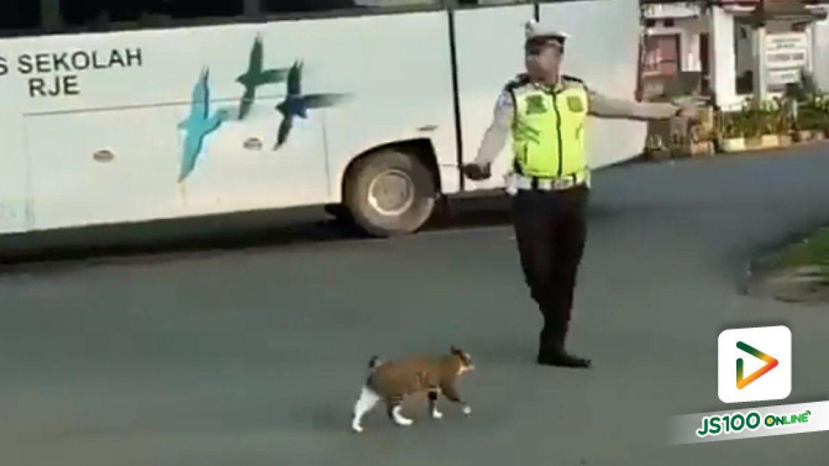 คลิปคุณตำรวจโบกรถให้เจ้าเหมียวข้ามถนน ในต่างประเทศ (16-08-61)