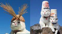 ชิโระ เจ้าแมวตะกร้า