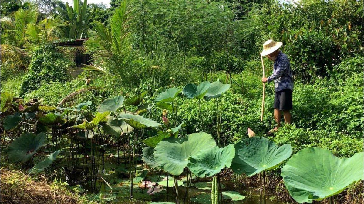 เกษตรอินทรีย์ มีความสุข ที่บ้านไร่สายทอง : The joys of organic farming at Baan-Rai-Sai-Thong
