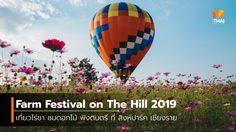 Farm Festival on The Hill 2019 เที่ยวไร่ชา ชมดอกไม้ ฟังดนตรี ที่ สิงห์ปาร์ค เชียงราย