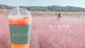 เที่ยวเกาหลี จิบกาแฟชมทุ่งหญ้าสีชมพูกับ Organic Cafe มีแค่ช่วงใบไม้ร่วงเท่านั้น