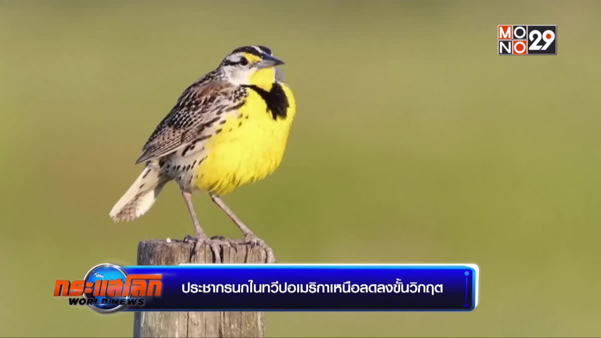 ประชากรนกในทวีปอเมริกาเหนือลดลงขั้นวิกฤต
