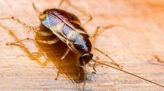 วิธี ไล่แมลงสาบ แบบง่ายๆปลอดภัยต่อสมาชิกทุกคนในบ้าน