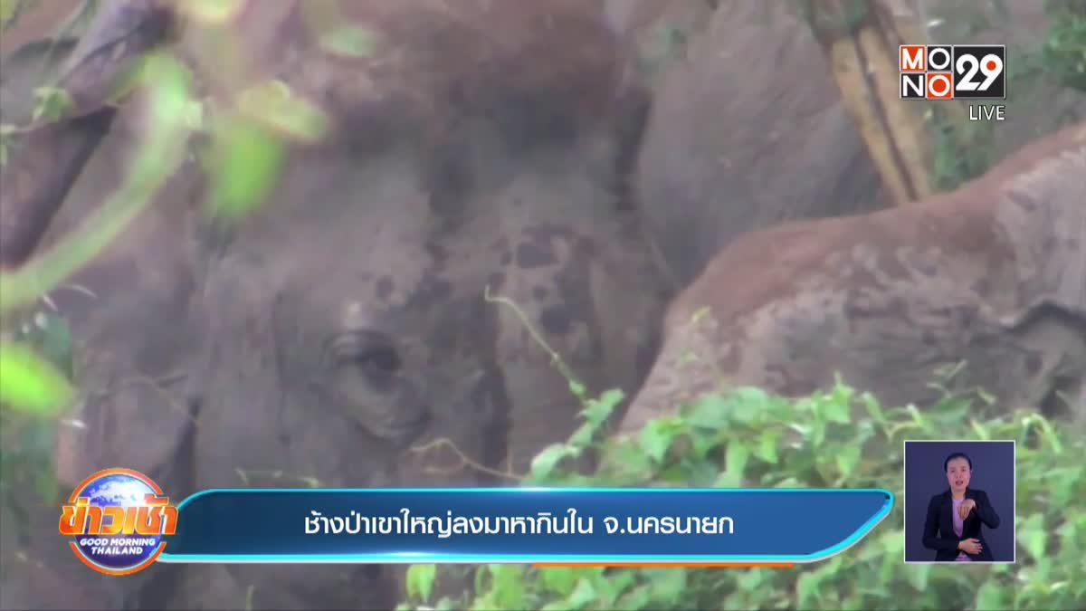 ชาวสวนปาล์มโอดช้างป่าบุกทำลายสวน เสียหายกว่า 50 ไร่