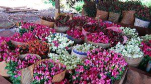 พุ่งพรวด! ราคาดอกกุหลาบขยับขึ้นรับ 'วาเลนไทน์'