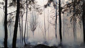 เผยความเสียหาย หลังเกิดเหตุไฟไหม้ป่า 'ภูกระดึง'