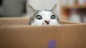 ทาสแมวหายห่วง แจกเคล็ดลับ ย้ายบ้าน อย่างไรไม่ให้แมวเครียด