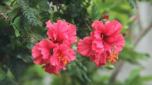 ชื่อเรียกดอกไม้ ภาษาไทย-ภาษาอังกฤษ