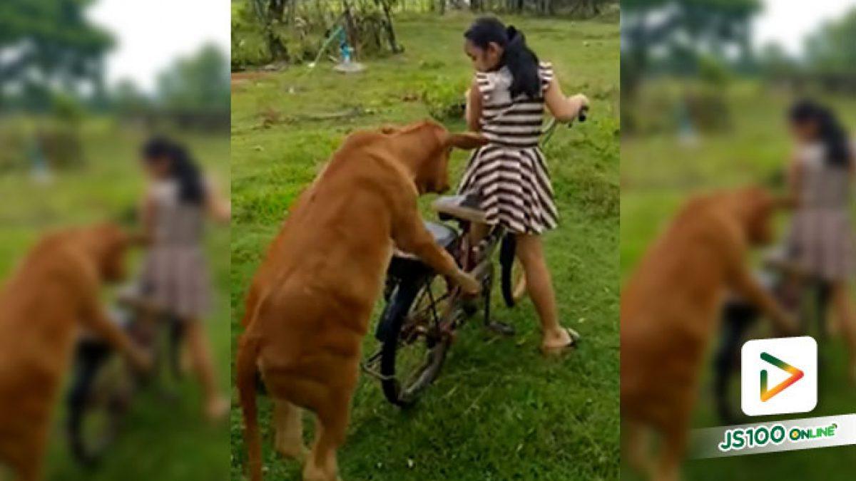 จะไปขี่จักรยานเล่นที่ไหน ขอเราซ้อนไปด้วยนะ