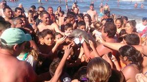 พิษออนไลน์ นทท.รุมเซลฟี่กับลูกโลมา จนเฉามือ สุดท้ายทิ้งศพตายคาหาด