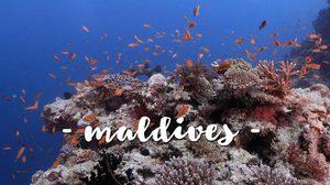 แนะนำ 8 สิ่งมหัศจรรย์ในมัลดีฟส์ - จุดดำน้ำ 8 จุดสุดพิเศษ
