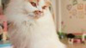 "Cat Cafe by Lila คาเฟ่แมวที่ ""ทาสแมว"" ควรมา"