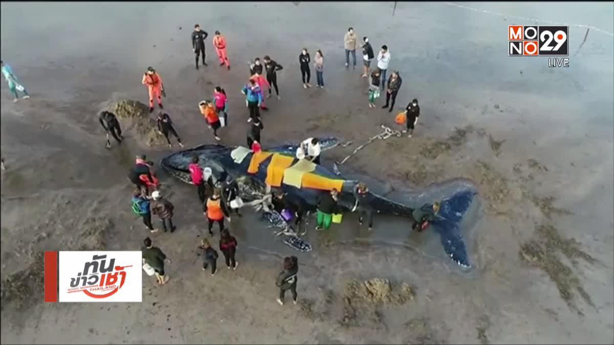 ช่วยเหลือวาฬเกยตื้นริมชายหาดอาร์เจนตินา